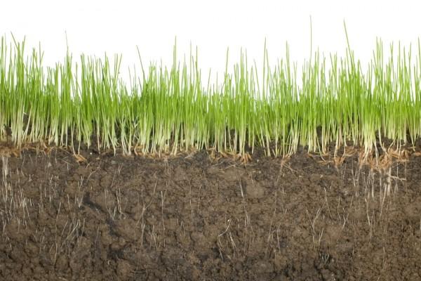 Что делать нашим земледельцам?