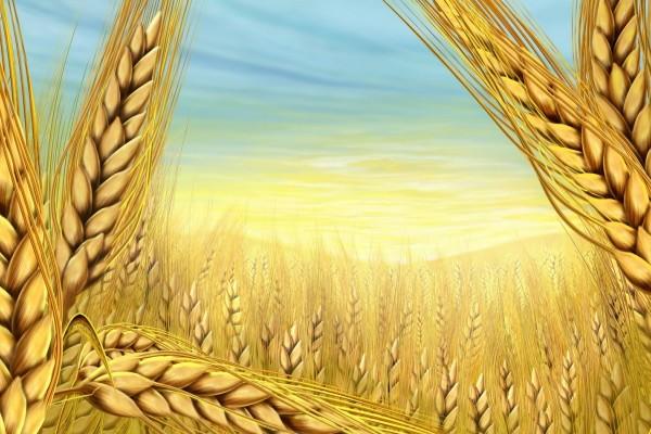 Суть агробиологической системы земледелия (АБС)