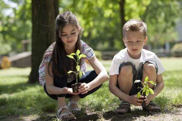 Эко подарок - Посади Дерево
