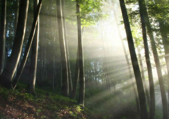 Новгородский лес