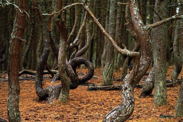 Пьяный лес