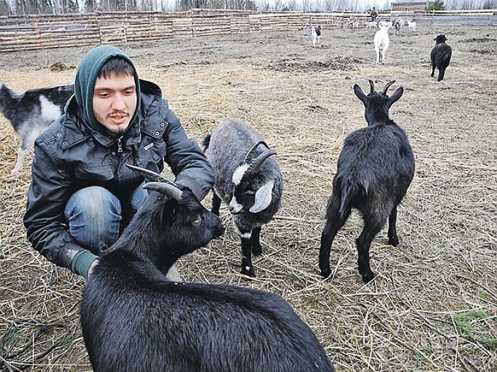 Бывший москвич Сергей Шепелев сам удивляется, как быстро нашел общий язык с козами. Фото: Алексей ОВЧИННИКОВ