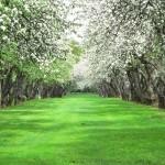 Саженцы для создания благотворительного сада