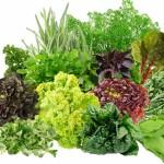 Полезная зелень для здоровья