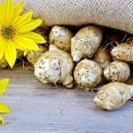 Топинамбур — замена картофелю