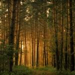 На Земле лесов нет! Часть 1