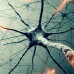 Зеркальные нейроны — массовая МАНИПУЛЯЦИЯ сознанием