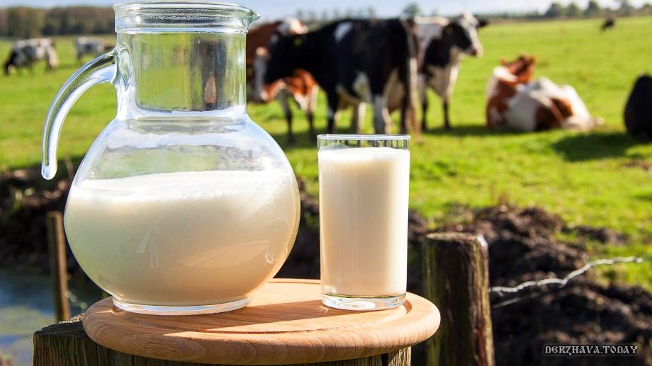 Польза молока - самый вредный миф в современном питании