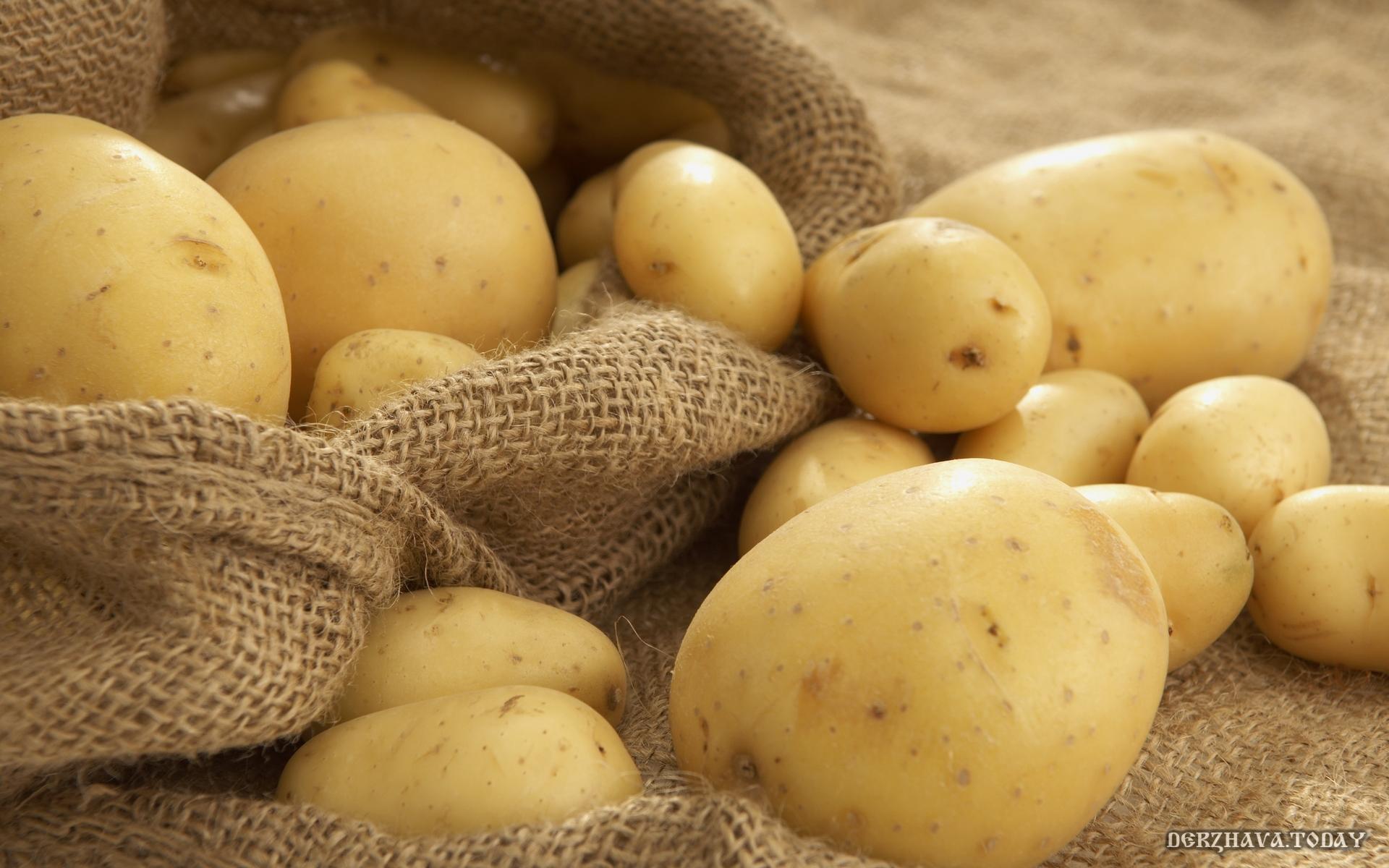 Картофель. Информация к размышлению