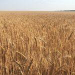 Успех российского сельского хозяйства привел в ярость фермеров из Франции
